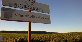 2019 15 Chambolle-Musigny
